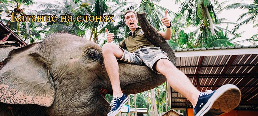 Катание на слонах на о. Самуи