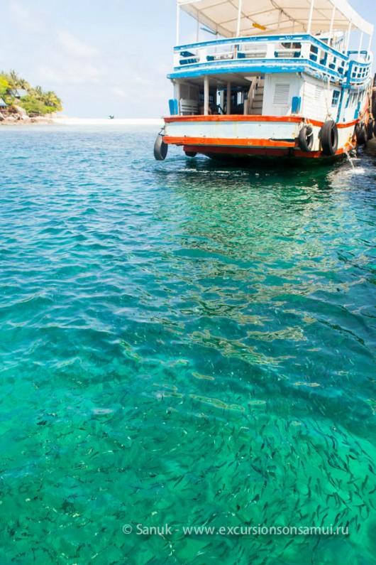 остров Ко Тао (Koh Tao)