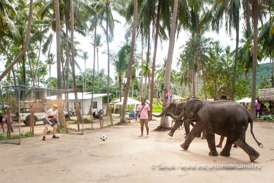 «Со слонёнком подружиться» — катание на слонах для детей и взрослых, остров Самуи, Таиланд