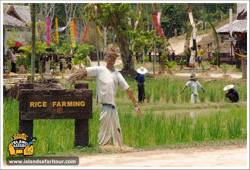 Островное сафари, остров Самуи, Таиланд