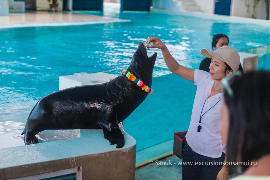Аквариум и зоопарк на о. Самуи, остров Самуи, Таиланд