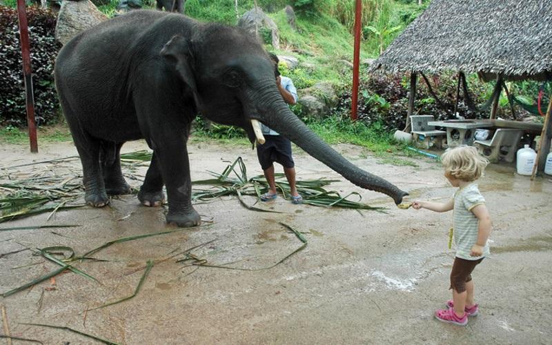 Обзорный тур по о. Панган, остров Самуи, Таиланд