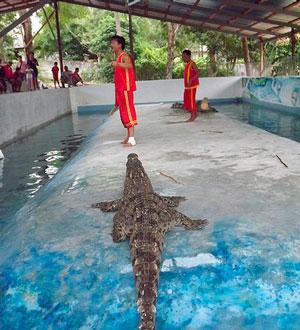 Шоу крокодилов на о. Самуи