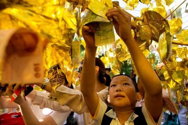 Денежное дерево Таиланда