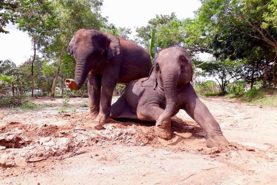 Слоновий заповедник. Этичный туризм, остров Самуи, Таиланд