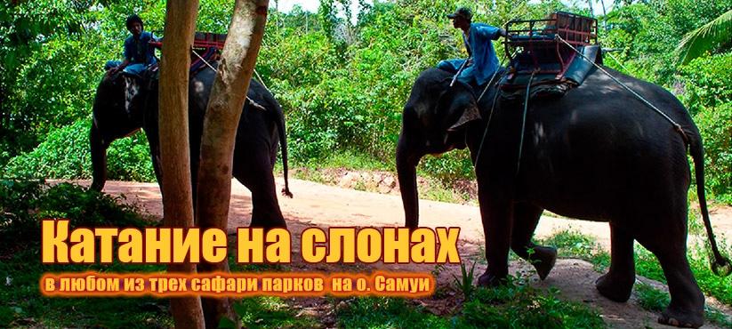 Катание на слонах, о. Самуи