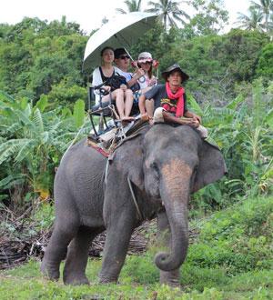 Elephant trekking, Samui