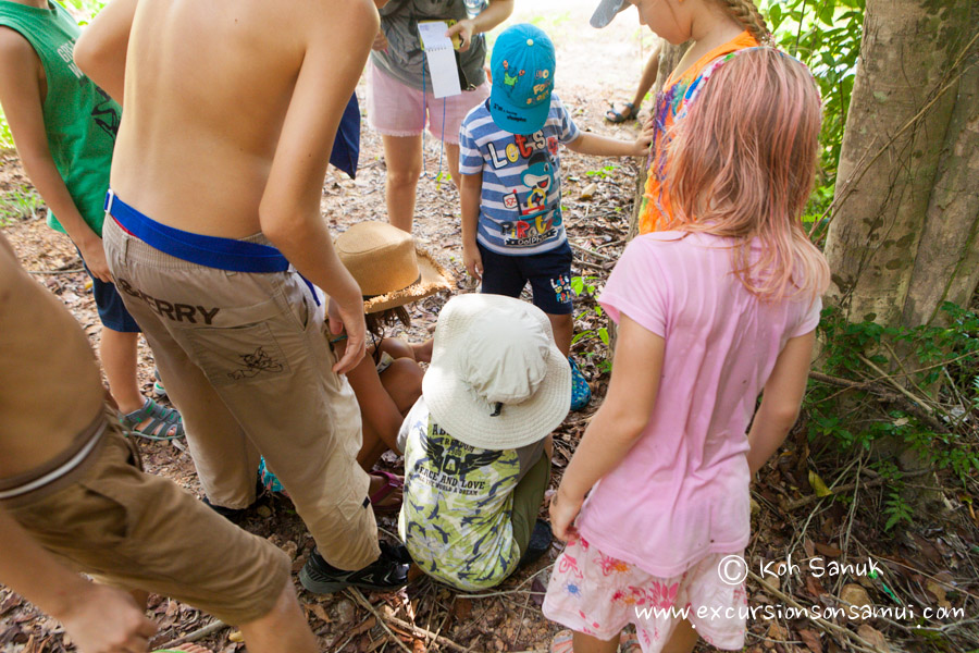 Квест-тур на острове Тан для детей и взрослых, остров Самуи, Таиланд
