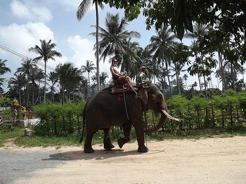 Большое приключение в джунглях, остров Самуи, Таиланд