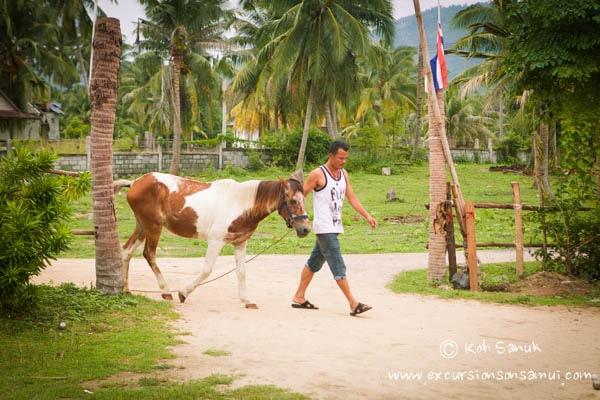 Прогулка на лошадях по пляжу и джунглям, остров Самуи, Таиланд