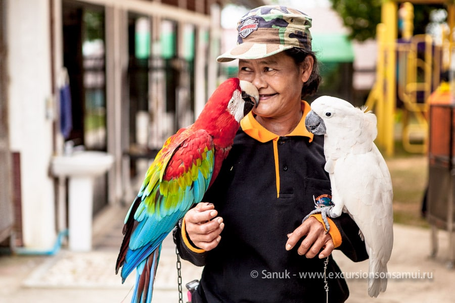 Туры в Парадайз парк, остров Самуи, Таиланд