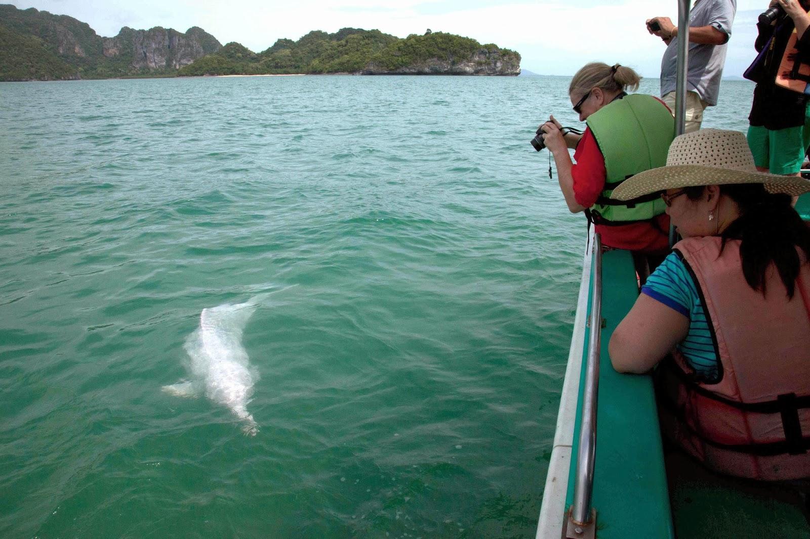 Круиз к розовым дельфинам, остров Самуи, Таиланд