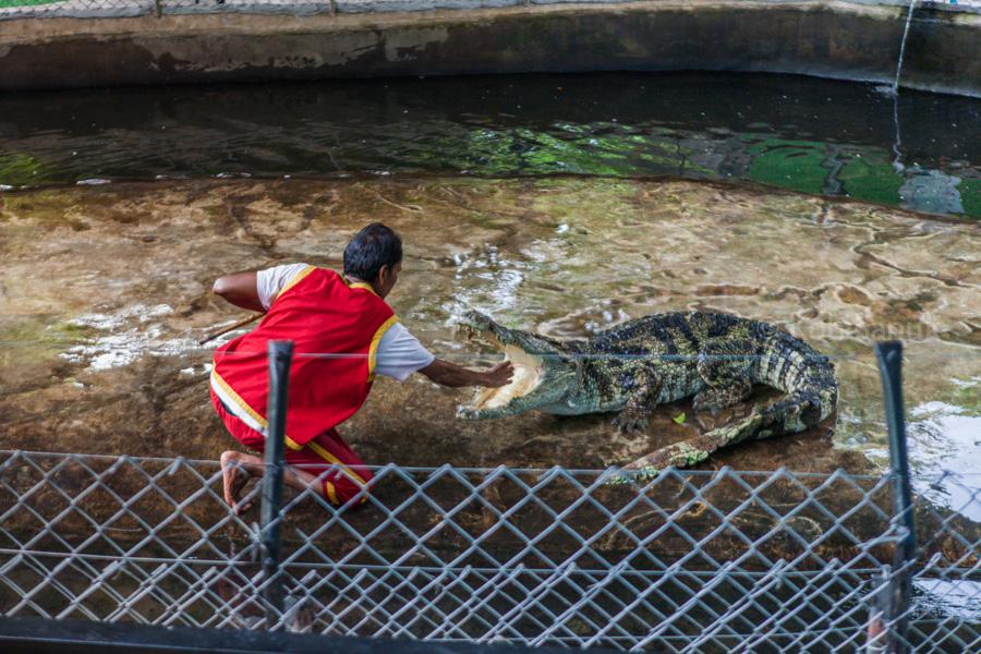 Ферма крокодилов, остров Самуи, Таиланд