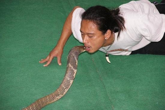 Змеиная ферма с русскоговорящим персоналом, остров Самуи, Таиланд