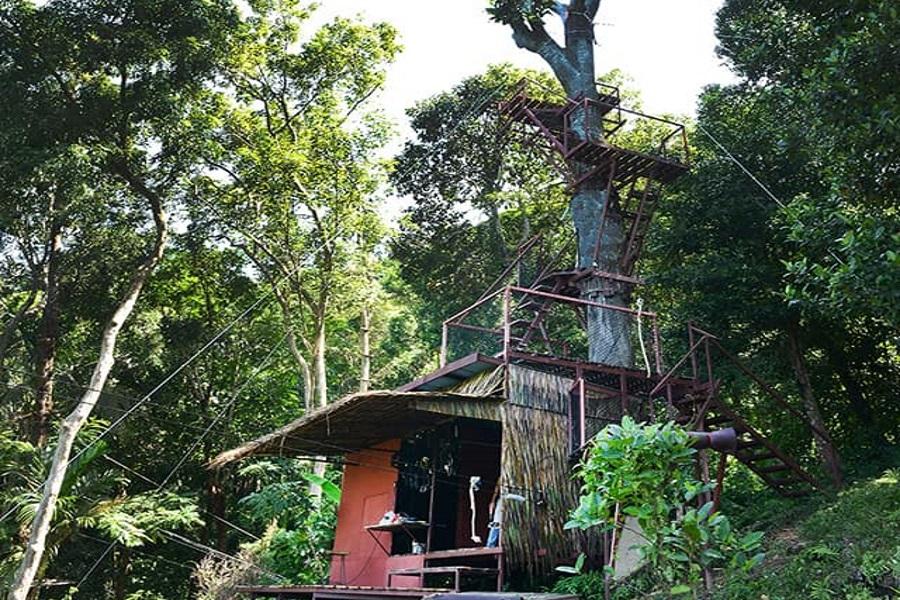Канатная дорога и кафе на дереве «Tree bridge», остров Самуи, Таиланд