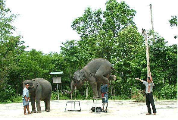 Джип-сафари на полдня, остров Самуи, Таиланд