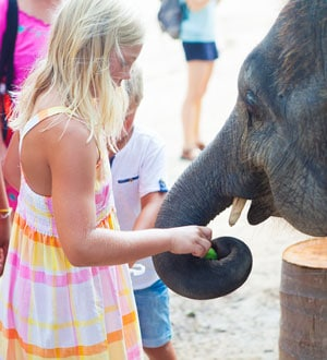 Катание на слонах, шоу слонов и обезьян на о. Самуи