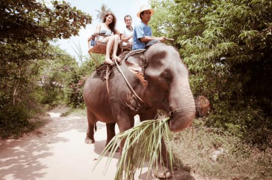 Слон, катание на слонах, Самуи